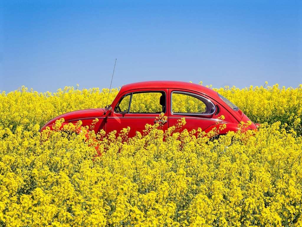 На фото изображен красный автомобиль в поле.
