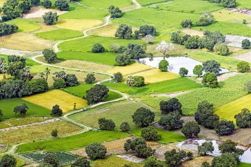 На фото изображены земельные участки.